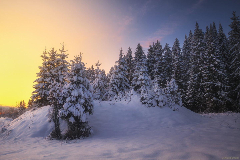 зима, закат, лес, холм, мороз, снег, вечер, Смольский Евгений
