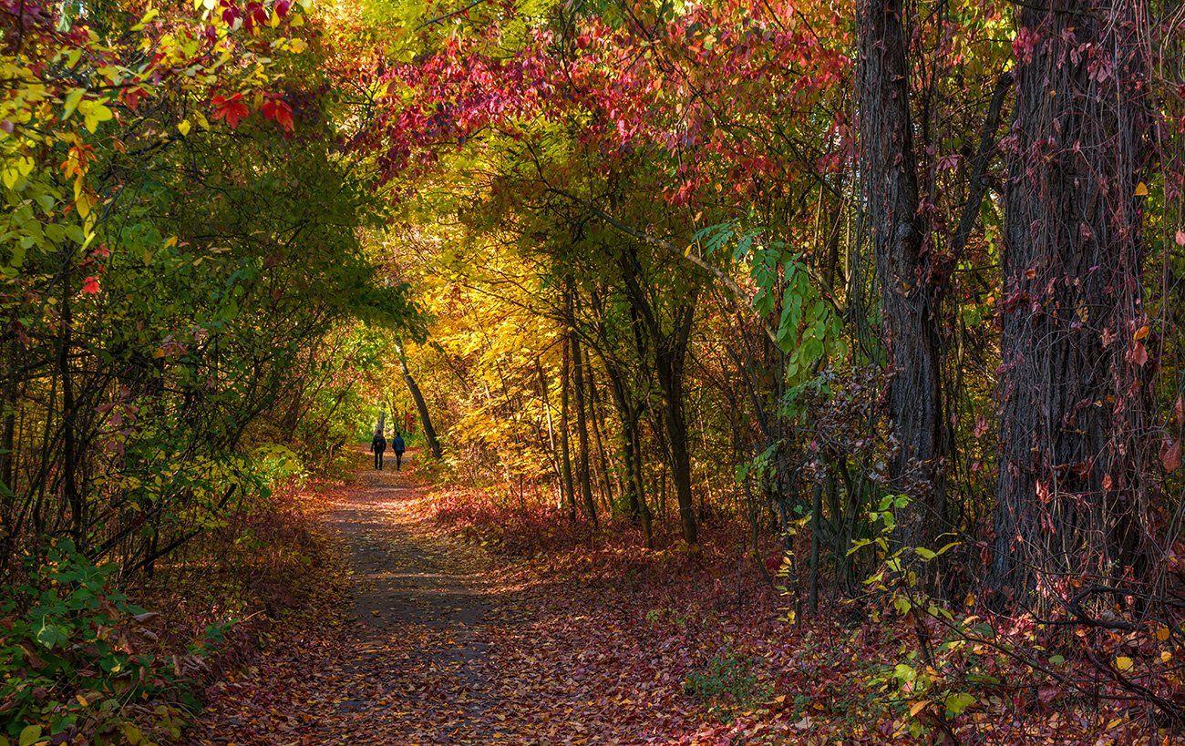 landscape, пейзаж, парк, лес,  деревья, солнечный свет,  солнце, природа,   прогулка, осень, осенние краски, Шерман Михаил