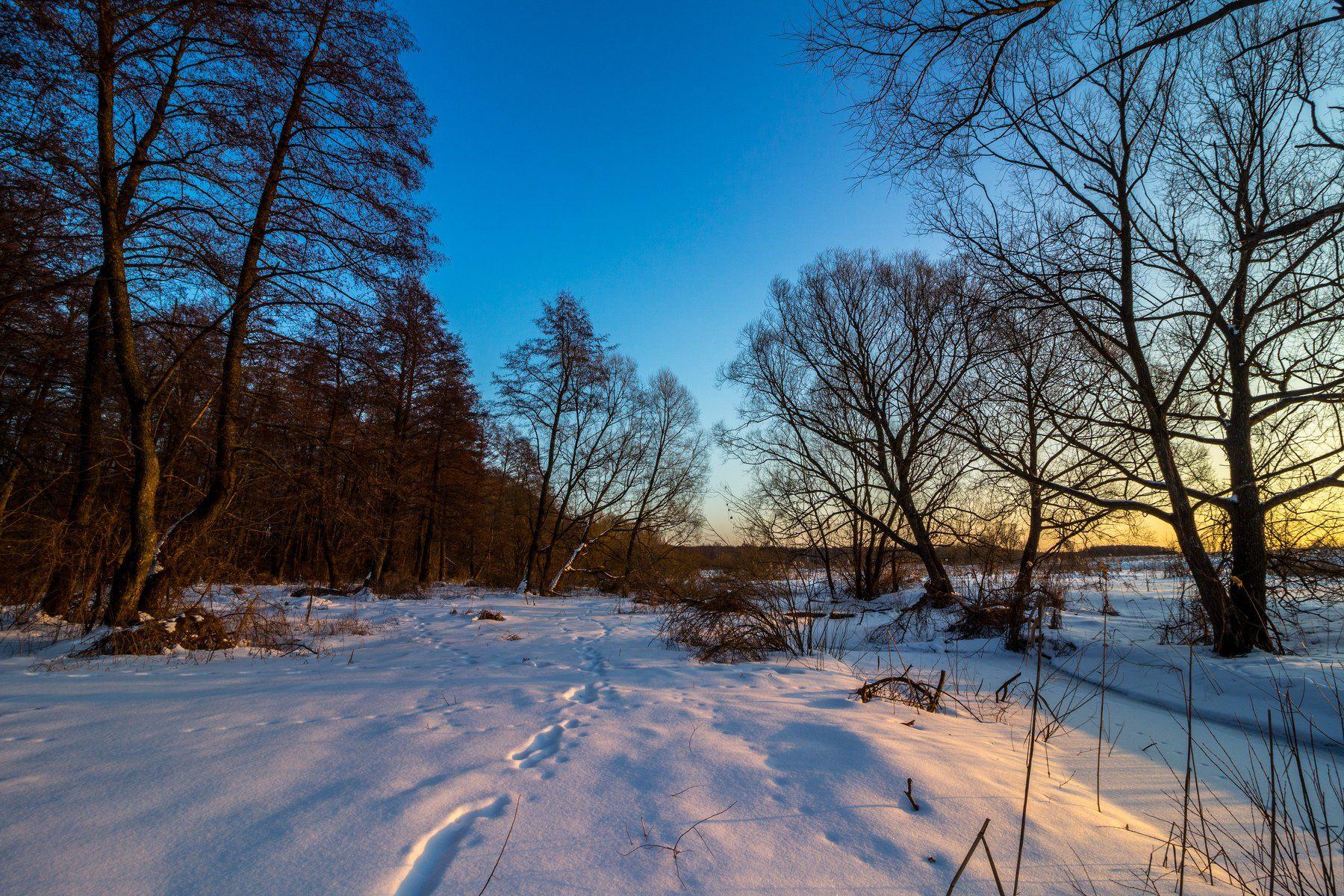 зима, лес, река, усмань, снег, вечер, ольха, Руслан Востриков