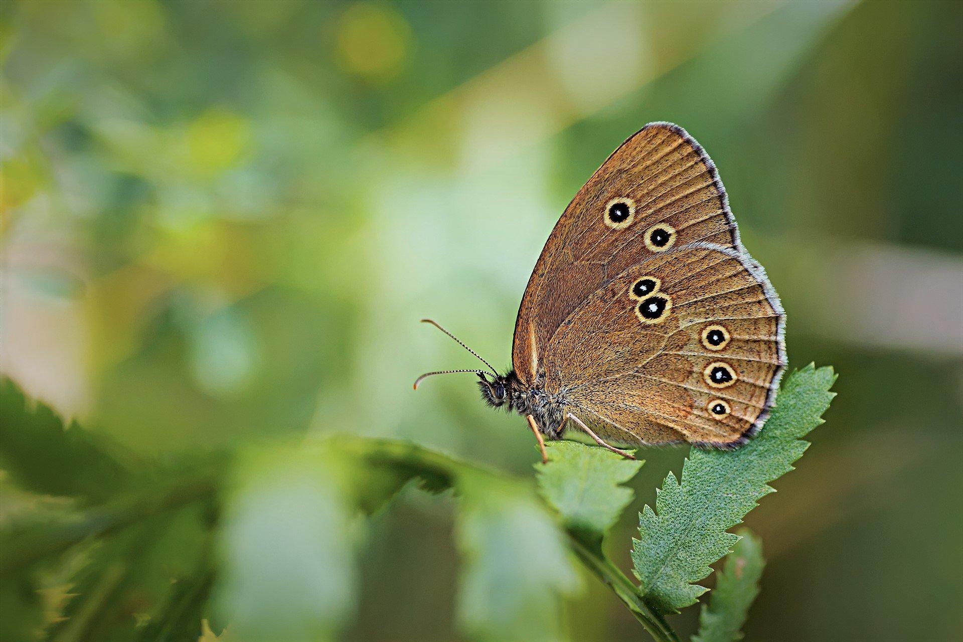 бабочка, трава, крылья, свет, фон, Котов Юрий