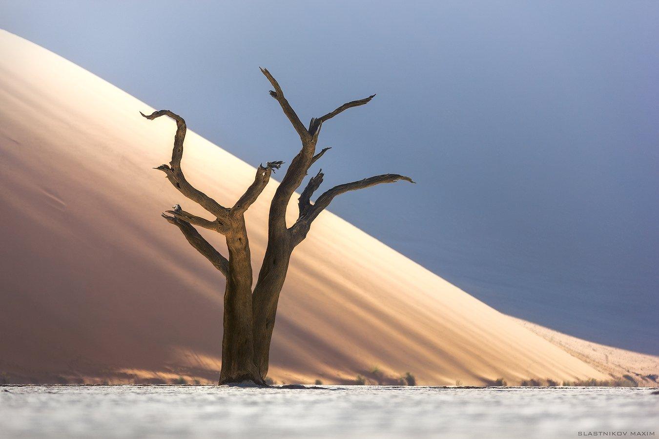 намибия, пустыня, дюны, лес, деревья, песок, время, африка, путешествия, соль, плато, озеро, travel, explore, namibia, outdoor, travel, deadvlei, tree, dunes, desert, africa, Максим Сластников