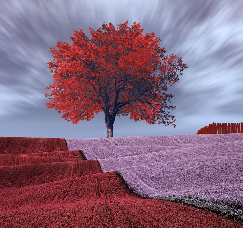 tree, ir, red, purple, wave, fence, pink, Caras Ionut