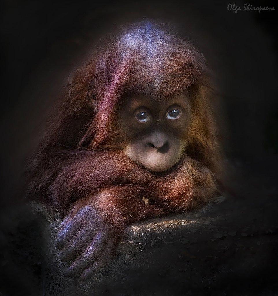 зоопарк, звери, тель-авив, чувства, Olga Shiropaeva