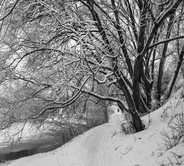 жанр, ч/б, снег, b&w, black and white,черное и белое, черно-белое,графика, плетёнка, рязань, Клочков Олег