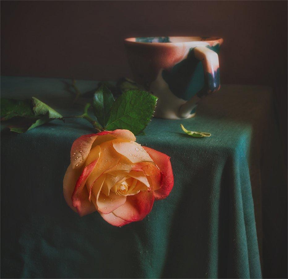 still life, натюрморт,    винтаж,  цветы, роза, капли, роса, чашка, минимализм, природа,, Шерман Михаил