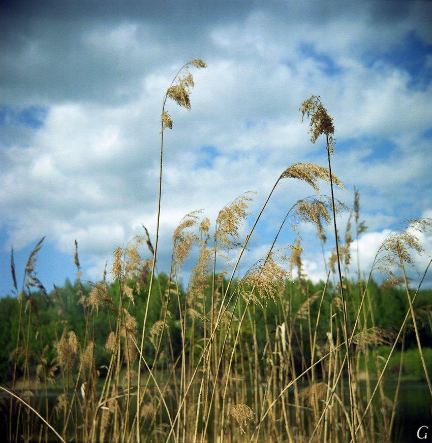 талашкино, травы, к небу, Gorshkov Igor_Feanorus