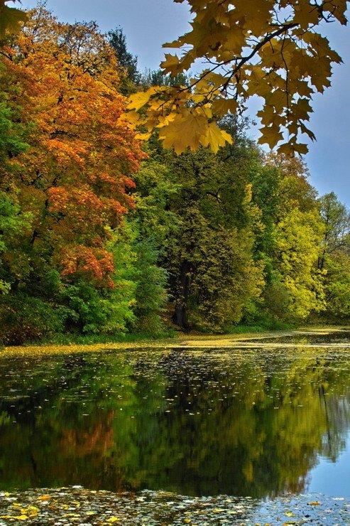 осень, full, краски, андреевские пруды, Andrey