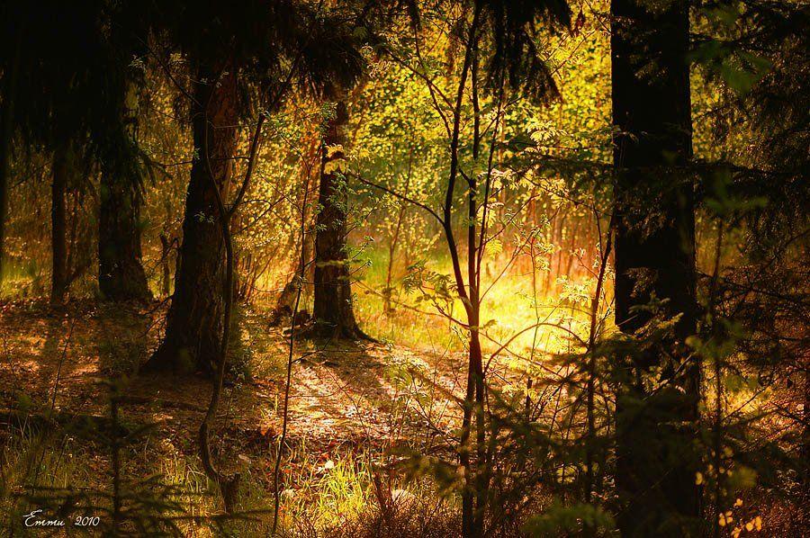 природа, волшебство, лес, красота, сказка, етти