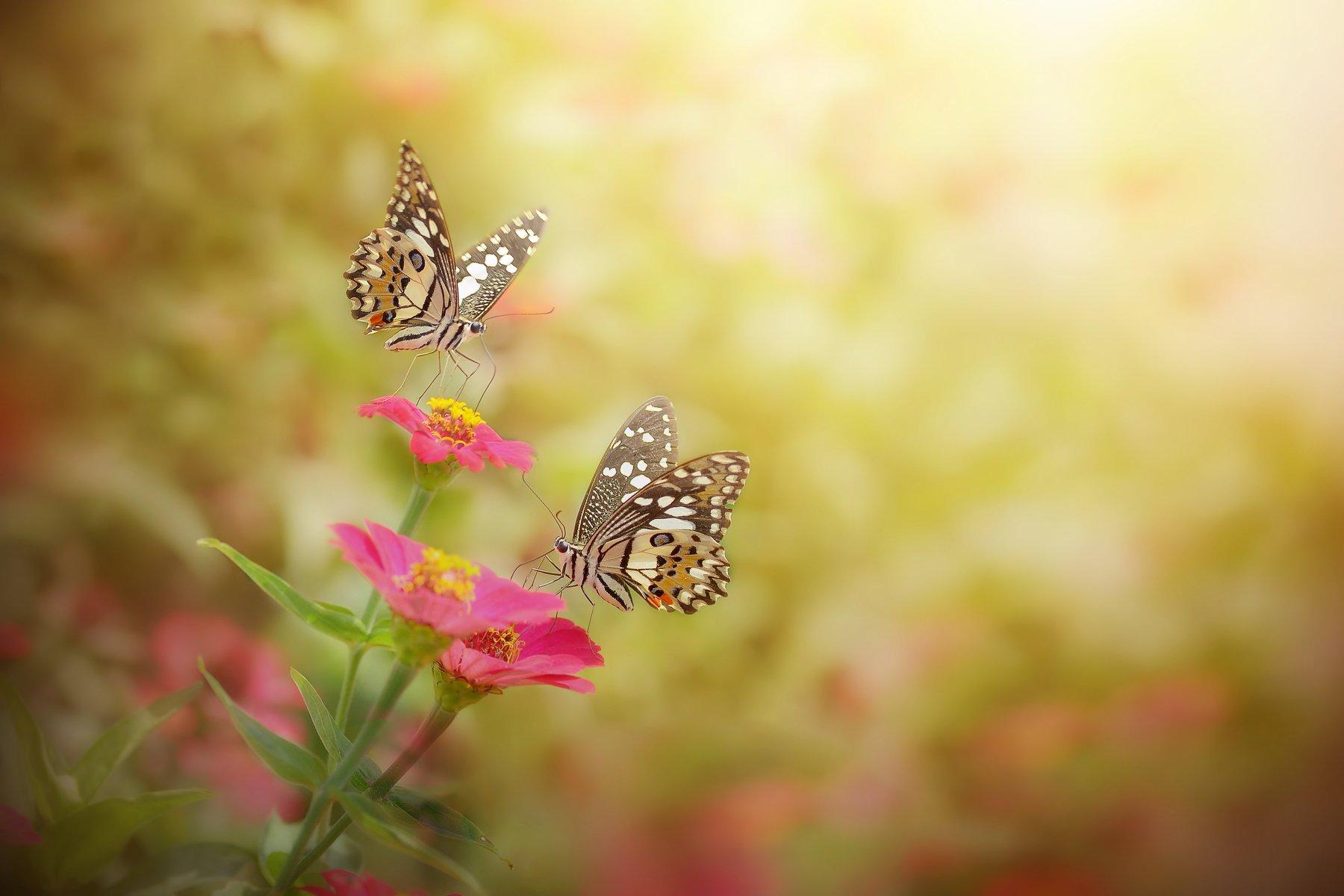 macro, beauty, insect, background, beauty, beautiful, background, backyard, nature, art, wild, flowers,, Muhammad Andan