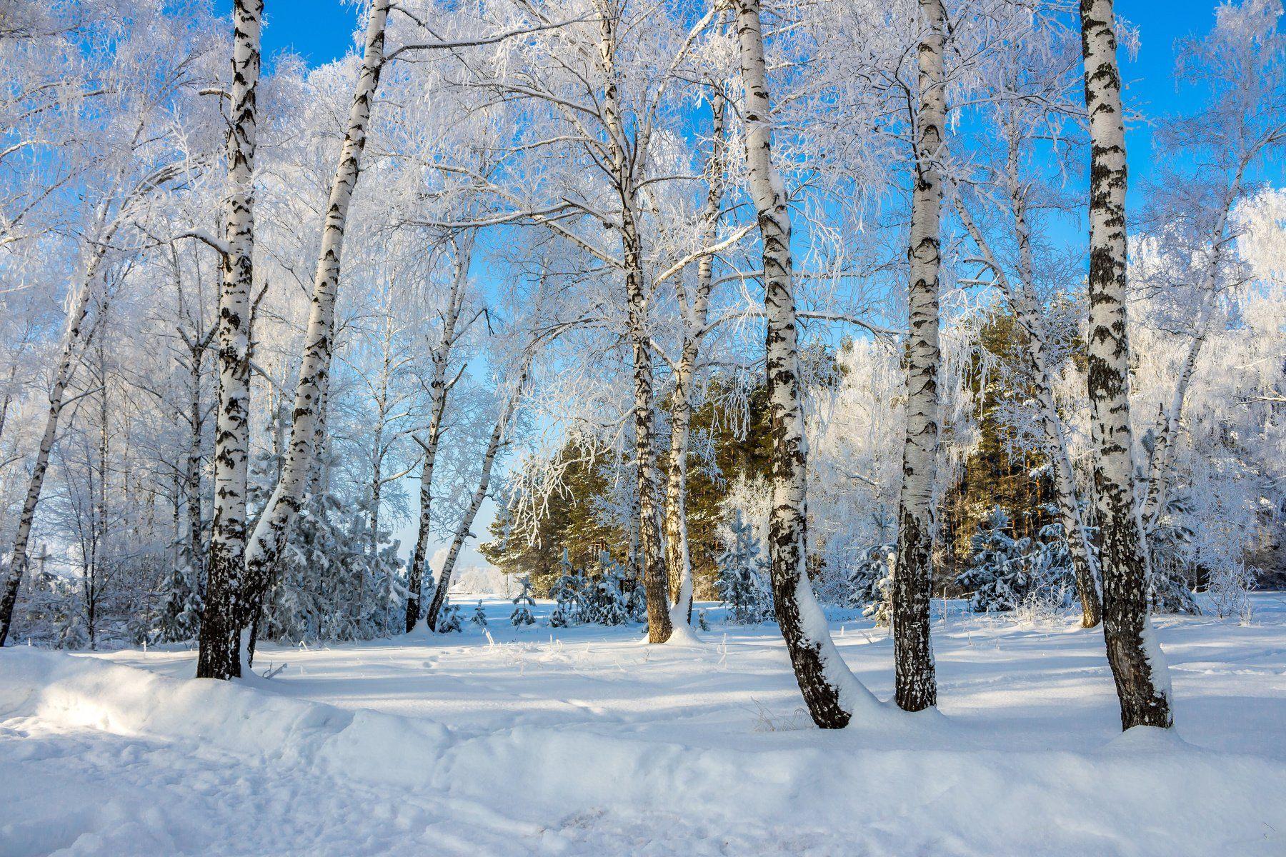 лес, заповедник, мороз, иней, снег, зима, Руслан Востриков