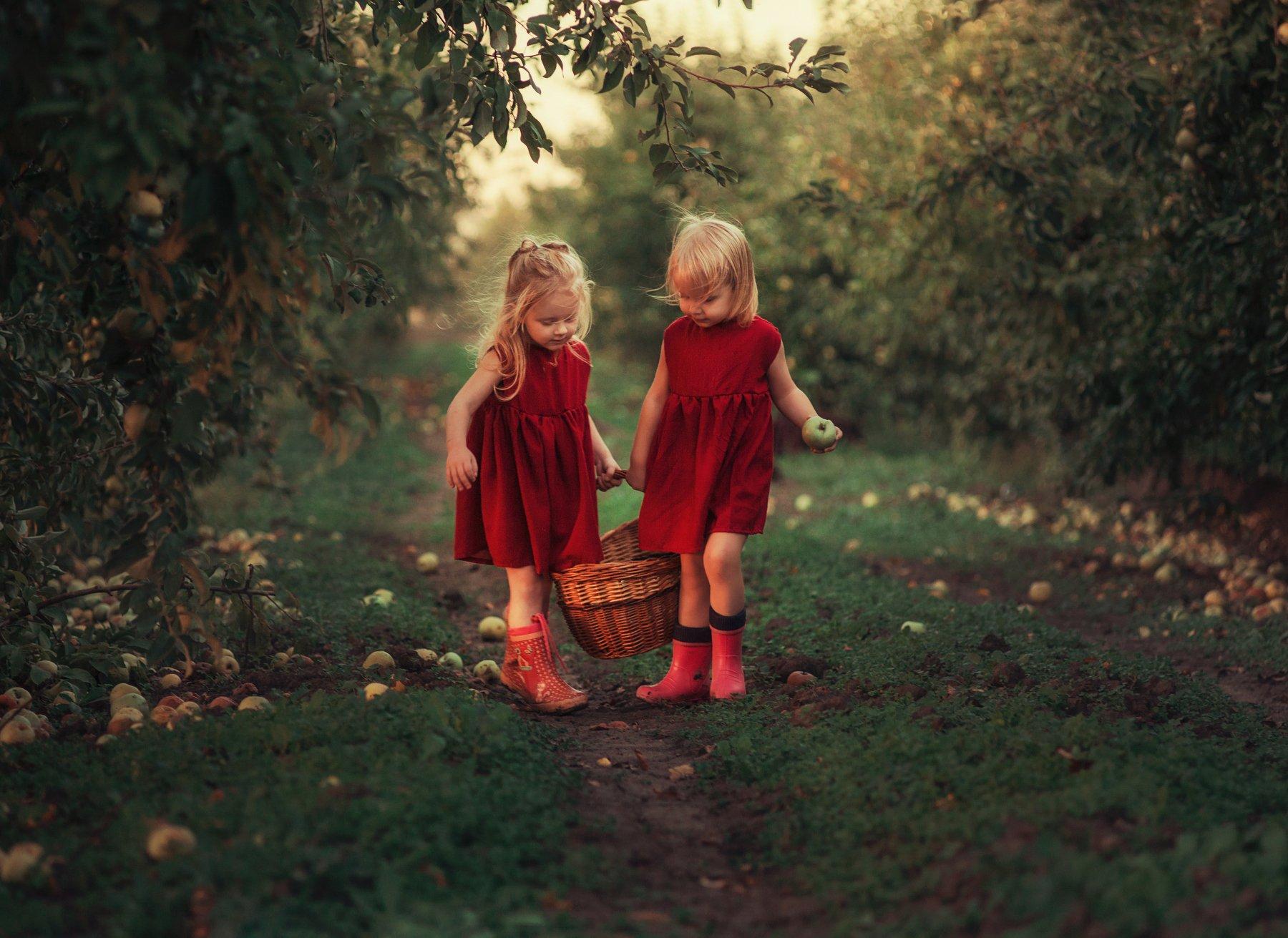 девочки, лето, яблоки, урожай, сады, яблоневые сады, корзинка, Светлана Червинская