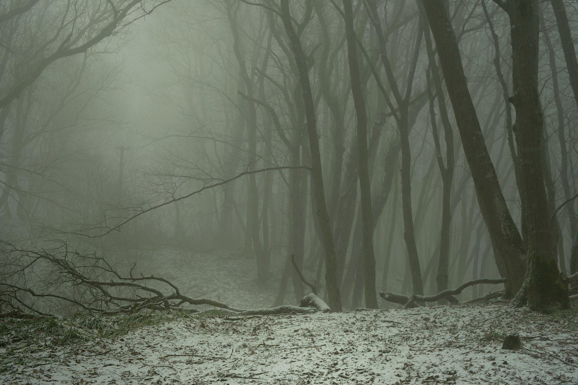 лес туман зима рассвет, Александр Жарников