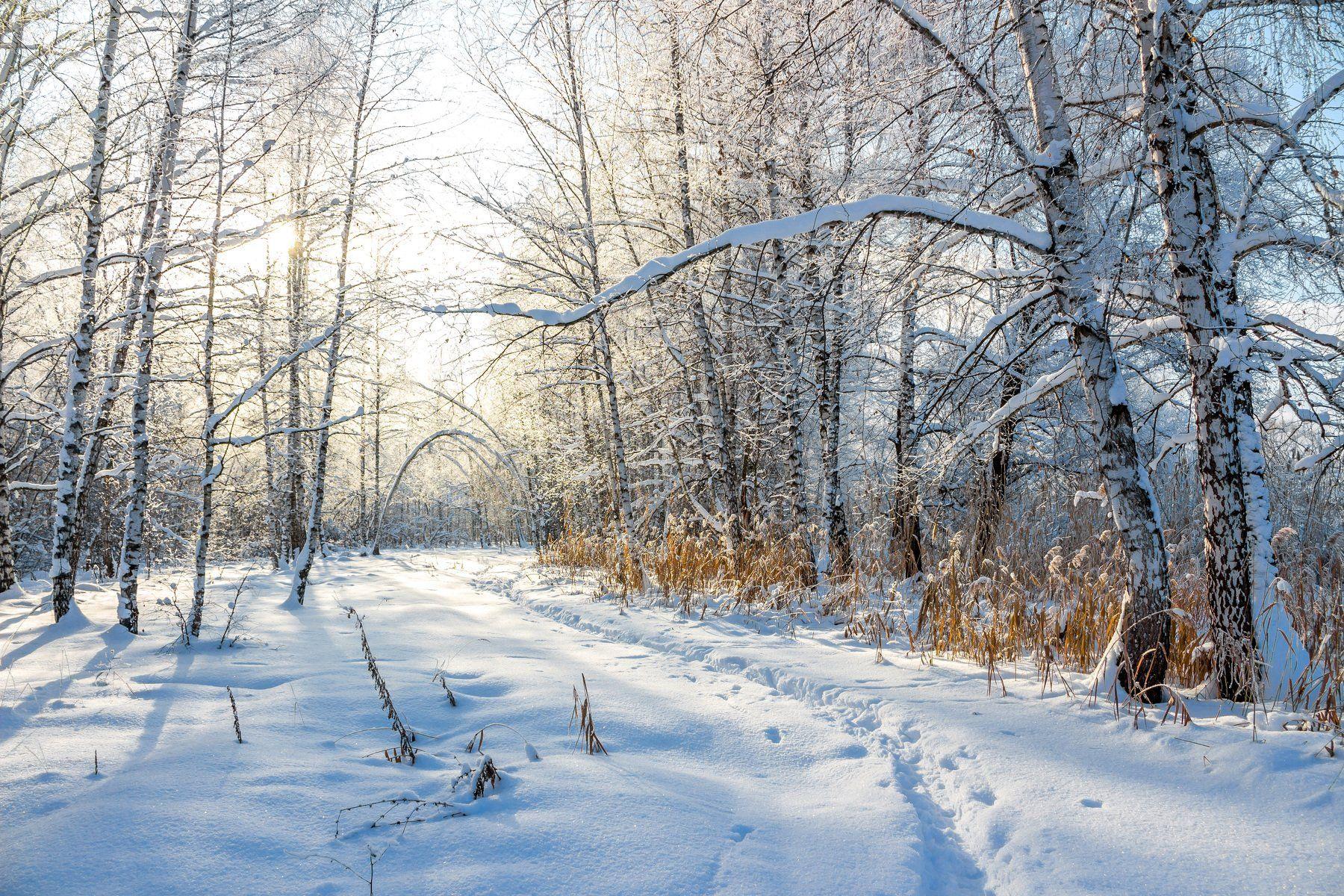 усмань, снег, рождество, мороз, лес, иней, зима, заповедник, берёзы, Руслан Востриков