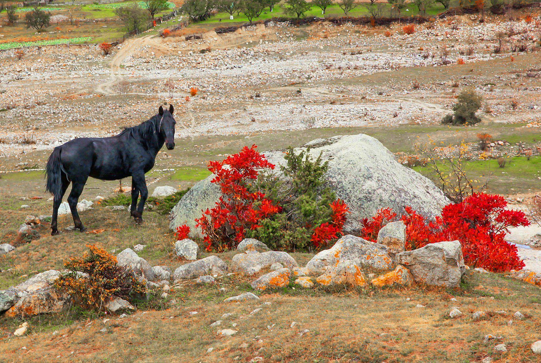 лошадь,горы,осень,кавказ, Магомедов Мурад