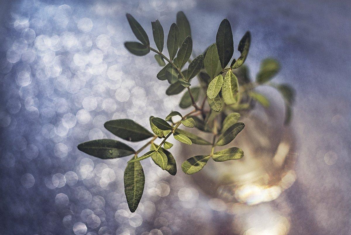 макро, макрофотография, цветок, весна. капли, свет, Орлова Ксения