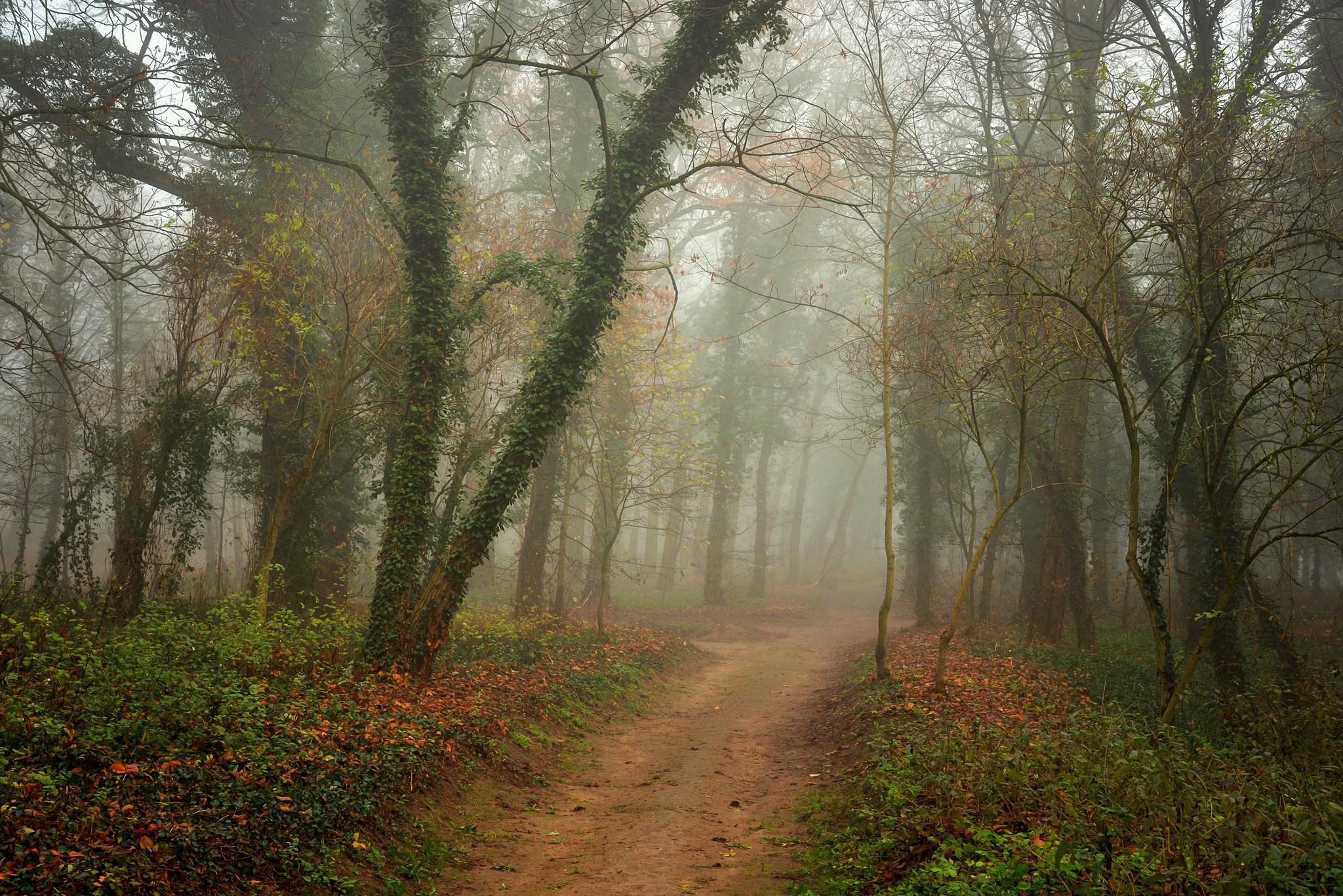 волшебный сад magical garden trees mist foggy road path dranikowski magic autumn fall green, Radoslaw Dranikowski