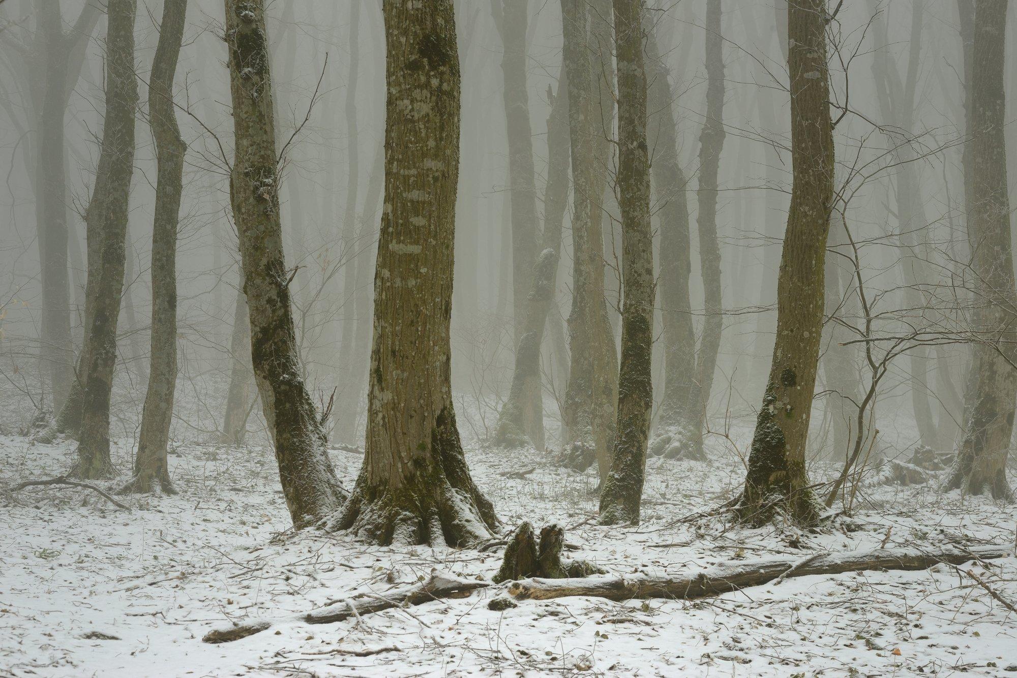 лес туман зима, Александр Жарников