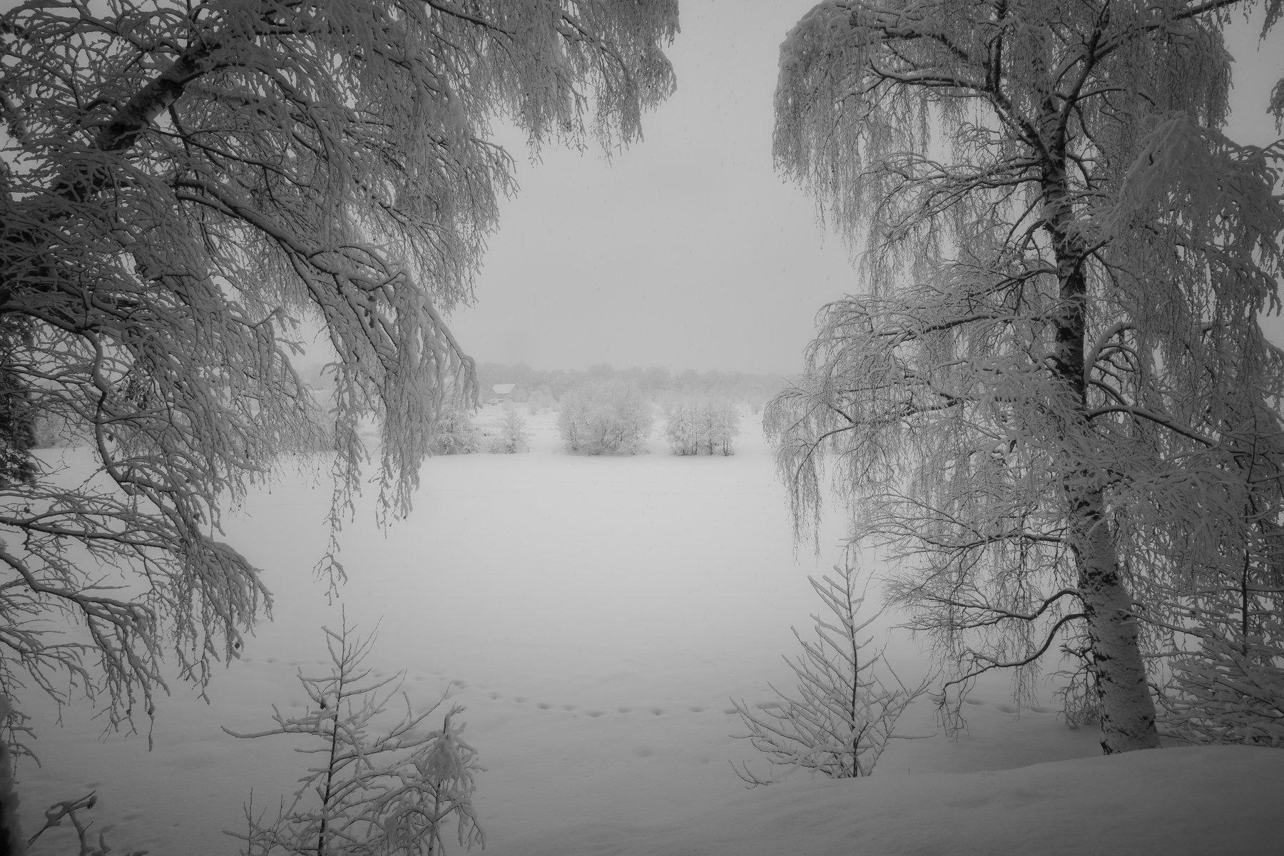 природа, пейзаж, зима, московская область, Мартыненко Дмитрий