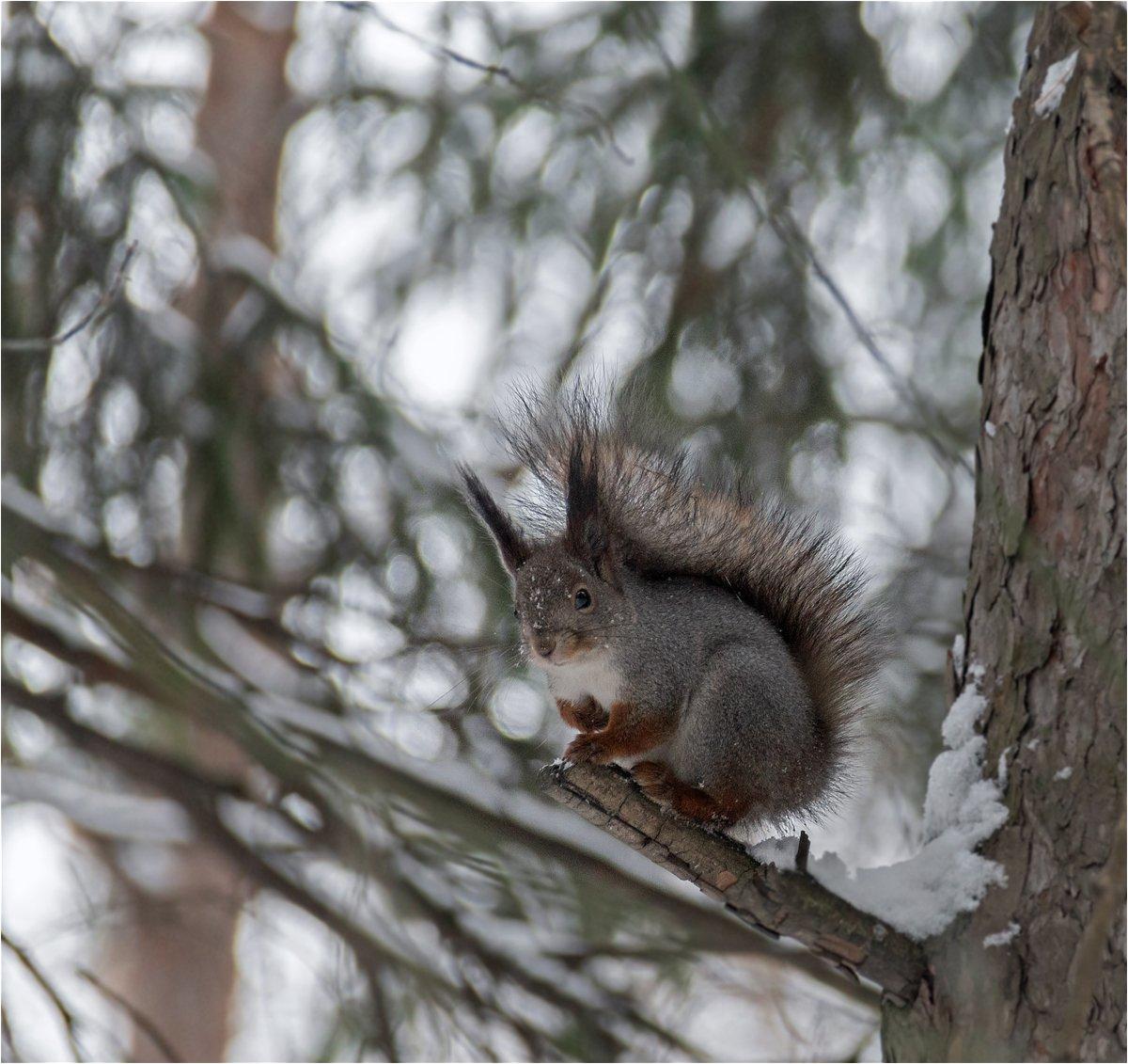 лес, белка, Куликова Ирина