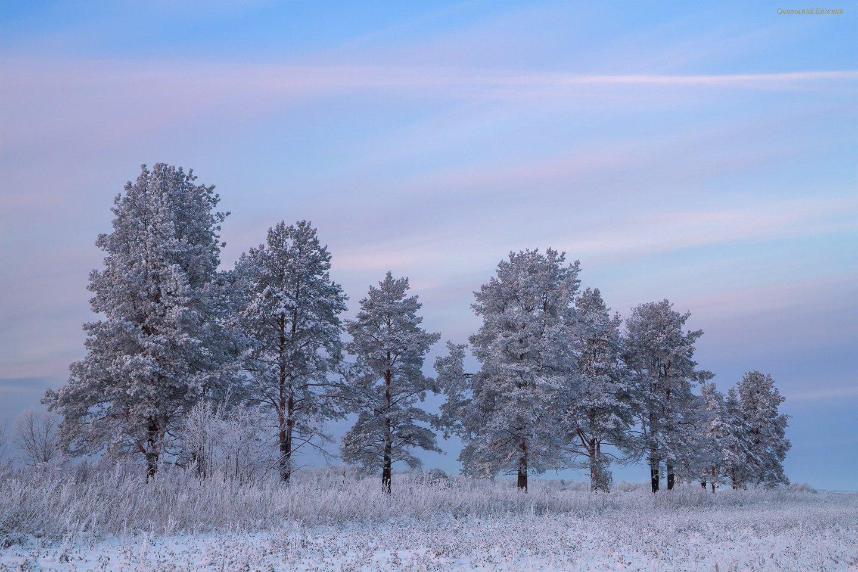 зима, снег, лес, сосны, мороз, вечер, закат, Смольский Евгений