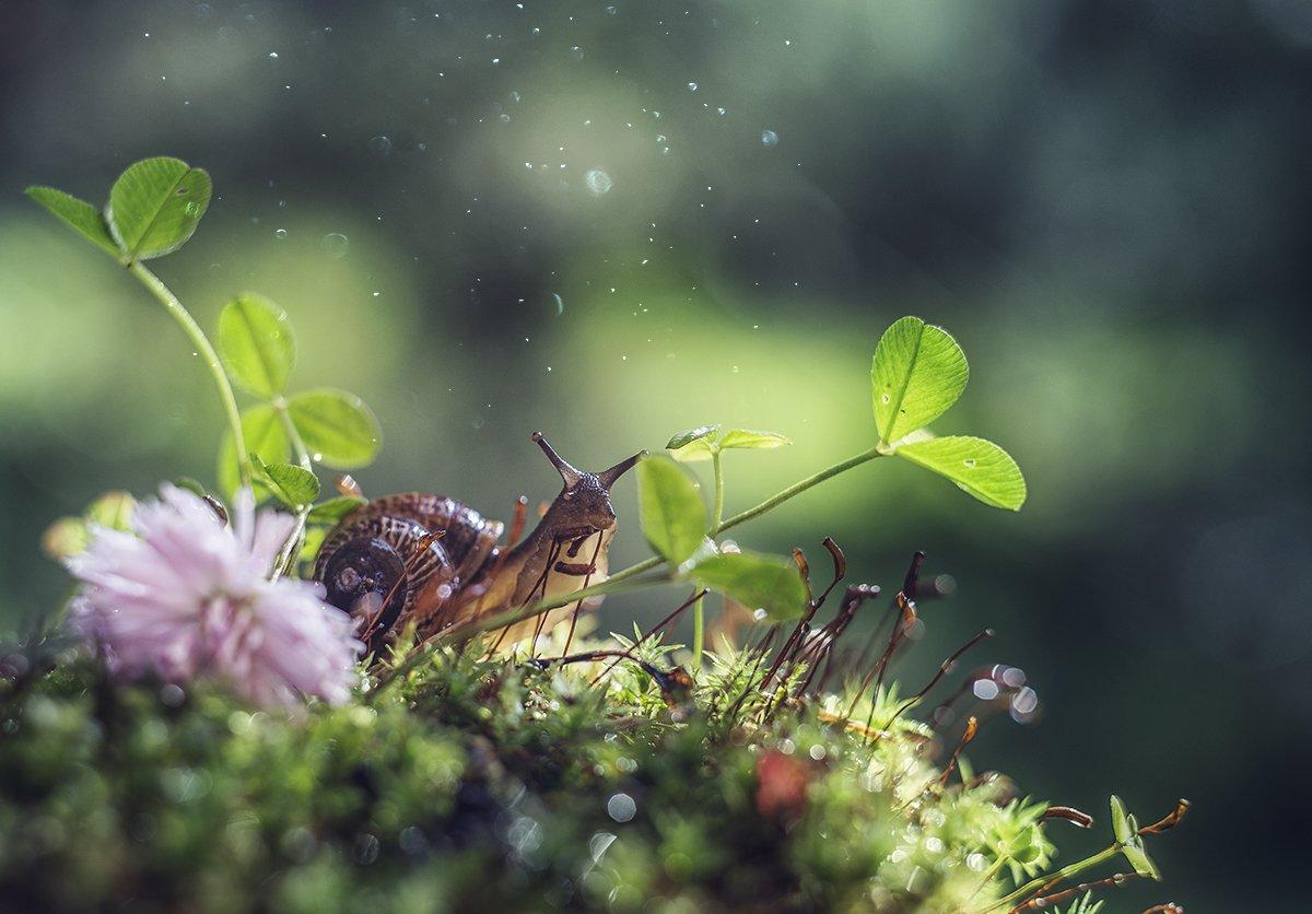 макро, макрофотография, лето, лес, капли, улитка, Орлова Ксения