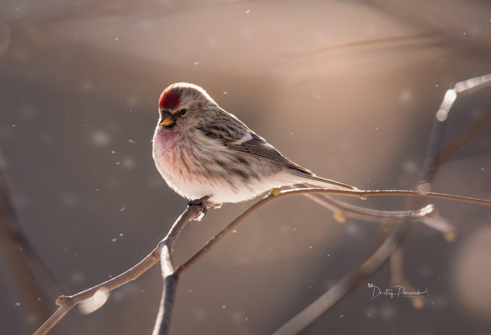 природа, животные, птицы, Дмитрий Посевич