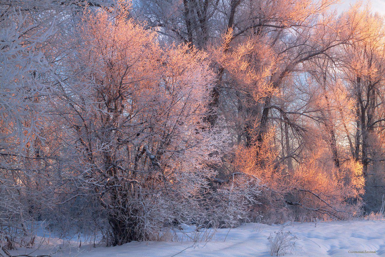 зима, иней, снег, лес, тополь, мороз, вечер, закат, Смольский Евгений