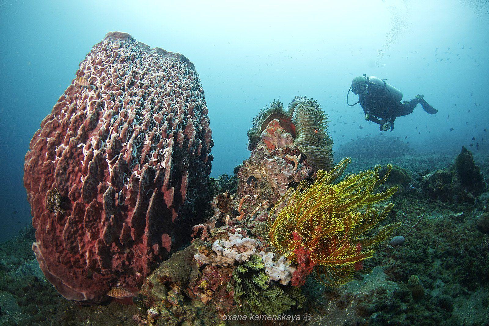 underwater sponge coral anemone diver blue, Оксана Каменская