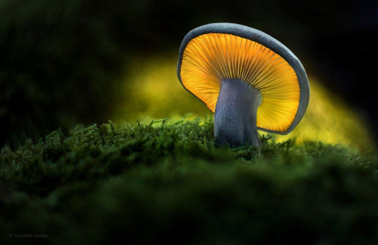 гриб, Полюшко Сергей