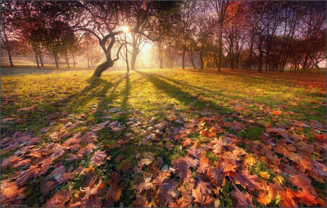 осень, силуэт, лучи, тени, утро, иней, листья, листва, заморозки, silhouette, autumn, fall, Влад Соколовский