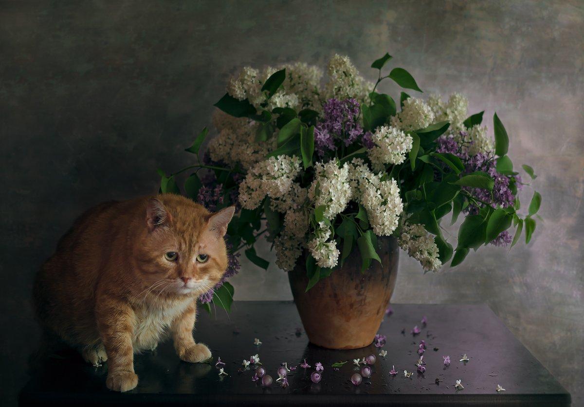 кот,сирень,натюрморт,рыжик, Елена Брежицкая