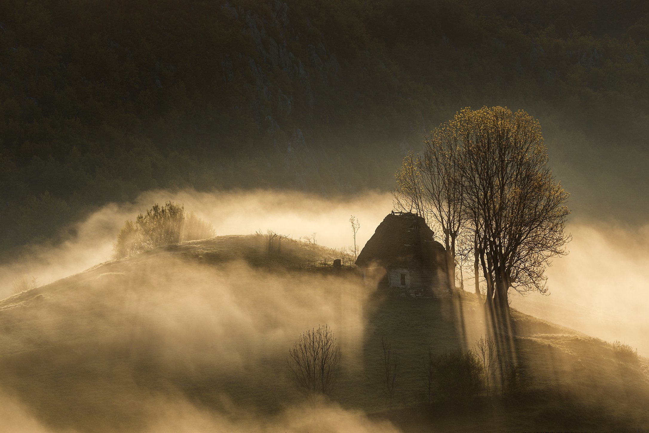 mountain, summer, landscape, travel, natur, romania, colors, apuseni, fog, sunrise, mist, light, Lazar Ioan Ovidiu