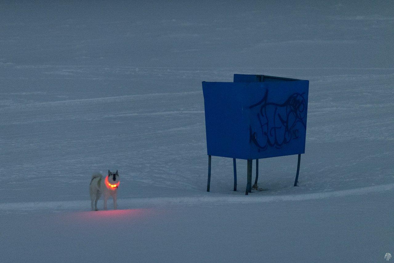 уличная фотография, streetphotography, животные, пёс, ночь,, Александр Малафеевский