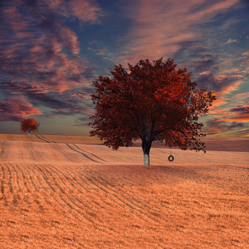 field, house, tree, grass, green, wheat, ground, tire, grain, Caras Ionut
