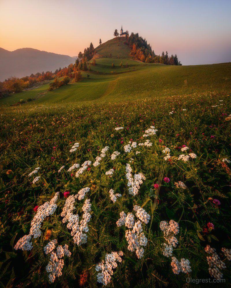 словения церковь закат поле холмы цветы, Rest Oleg