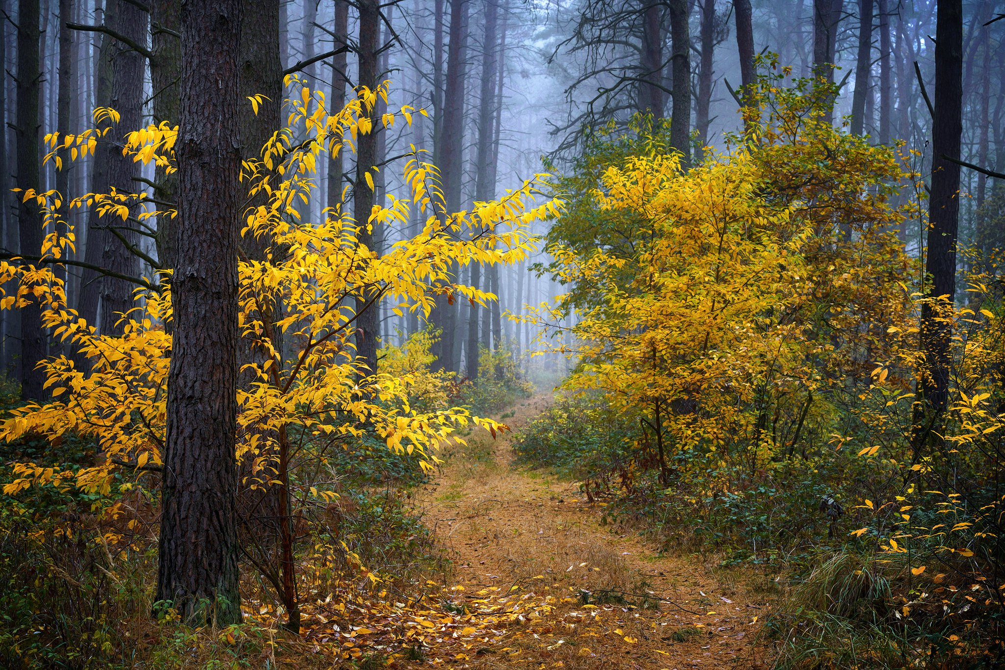 осенняя прогулка по лесу autumn fall wood dranikowski path road forest trees magic foggy, Radoslaw Dranikowski