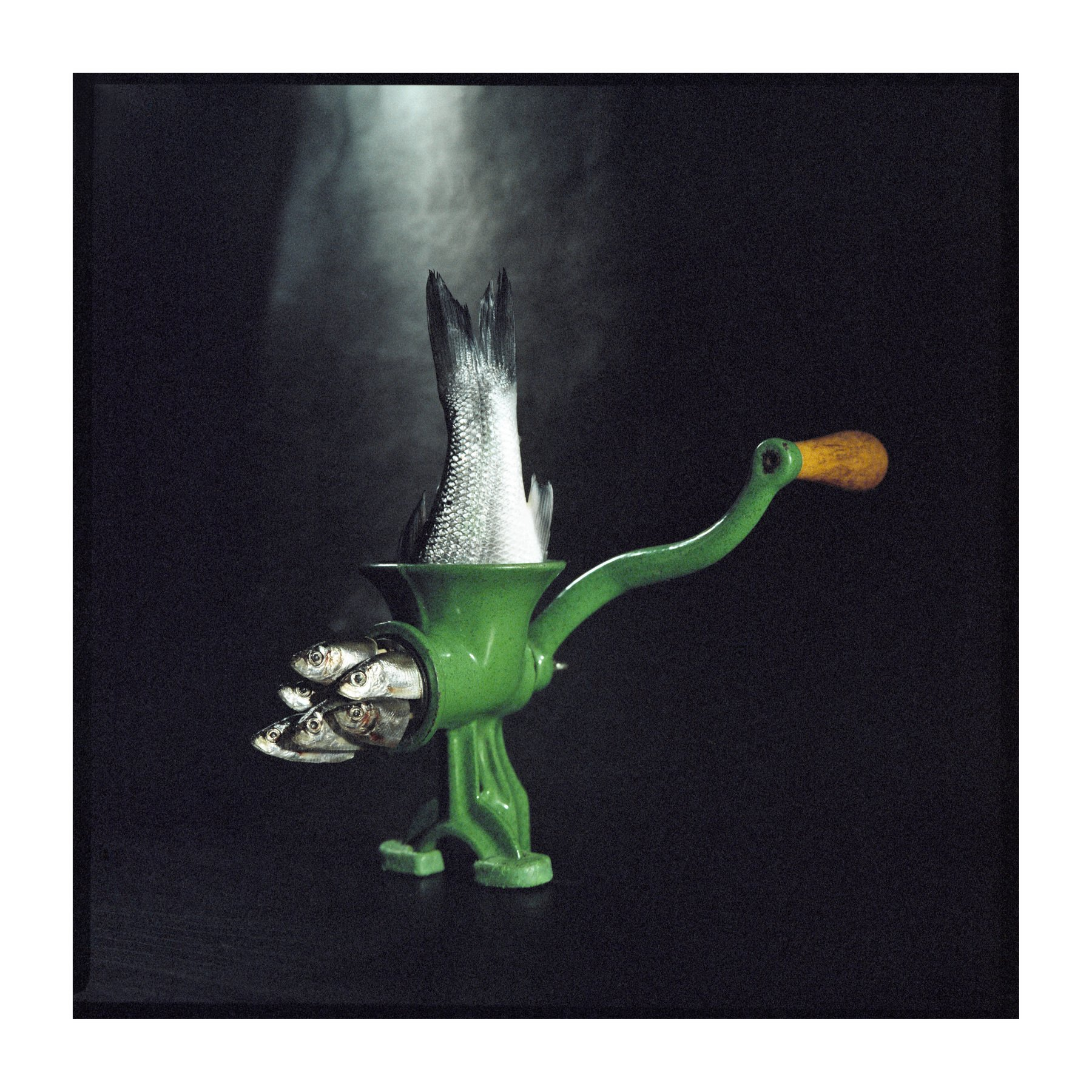 Film, analogue, art, fish, miracles, ironic, series, surrealism, Tomas