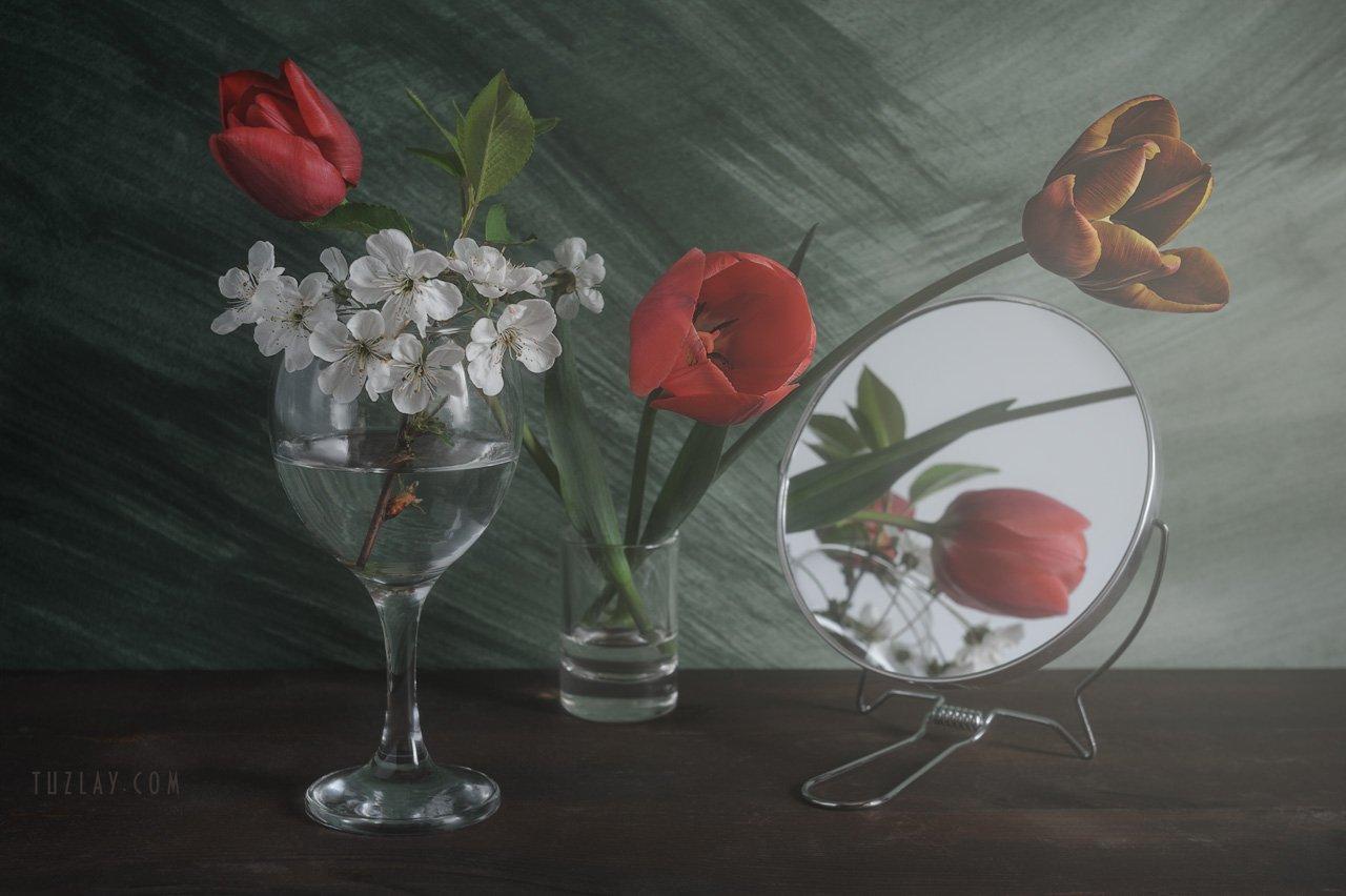 тюльпаны, апрель, белые цветки, цветки вишни, Владимир Тузлай