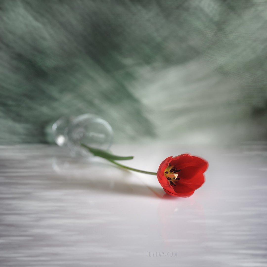 холст, цветы, флора, квадрат, тюльпан, весна, апрель, Владимир Тузлай