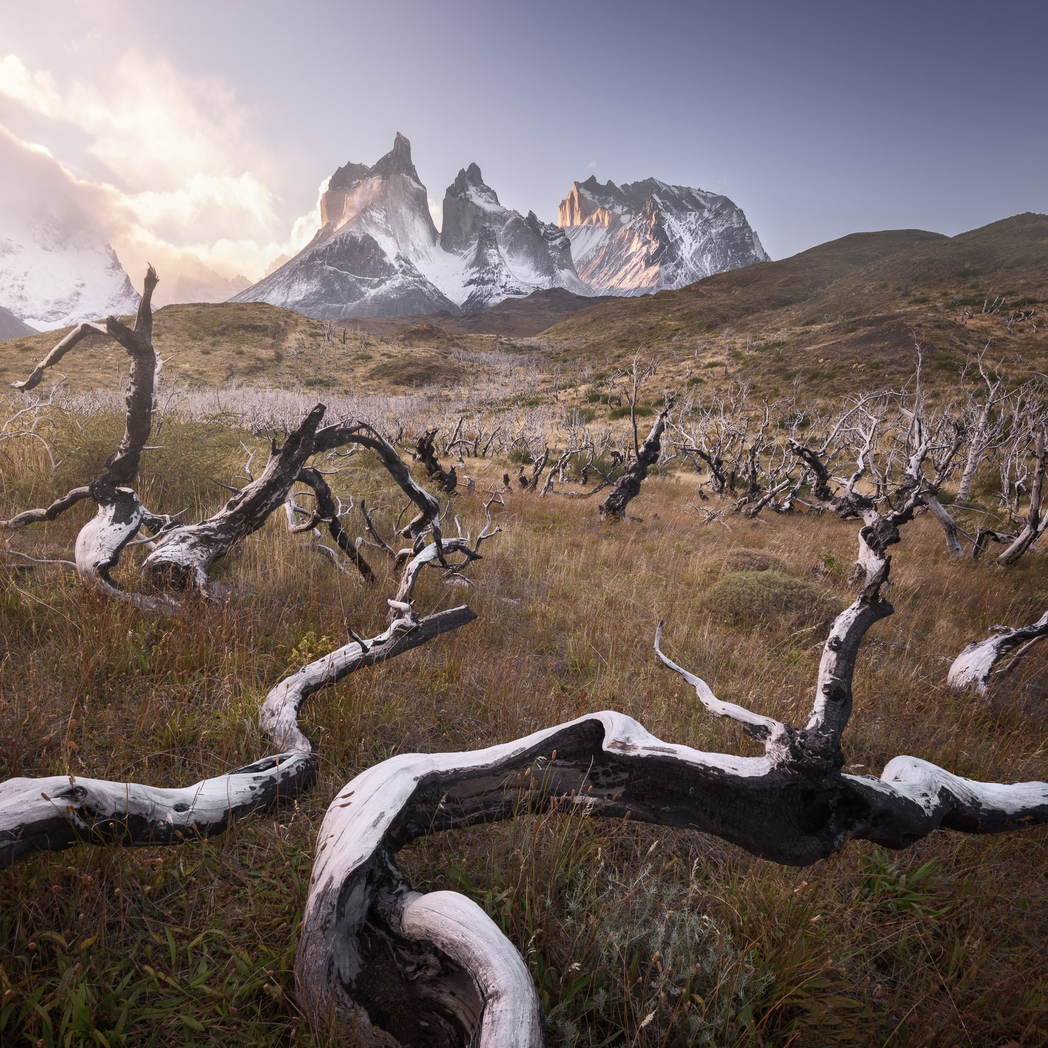 america, andes, beautiful, black, blue, branch, chile, clouds, cuernos, curved, dark, dead, del, dry, forest, glacier, grass, hiking, hill, ice, landmark, landscape, light, log, morning, moss, mountain, national, nature, outdoor, paine, park, patagonia, p, anshar
