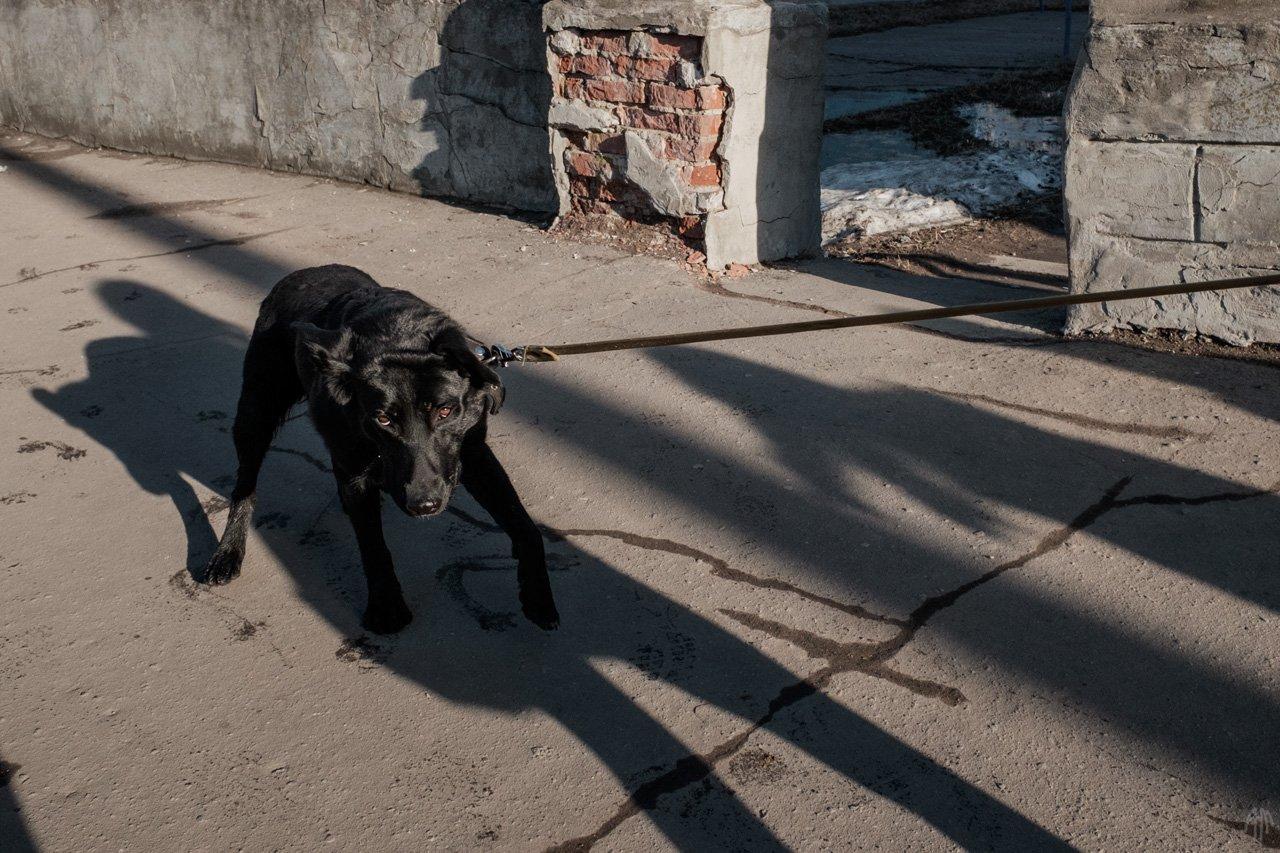 уличная фотография, streetphotography, животные, пёс,, Александр Малафеевский