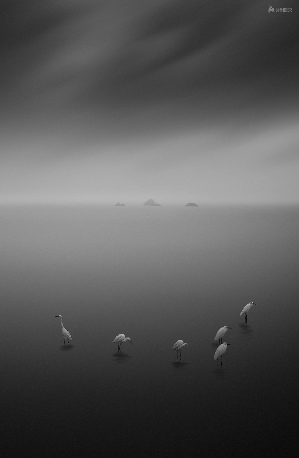 black & white,landscapes,reef,sea,travel,light and shadow,wenzhou,china,ecology,heron,bird,  Xiaolei Yang