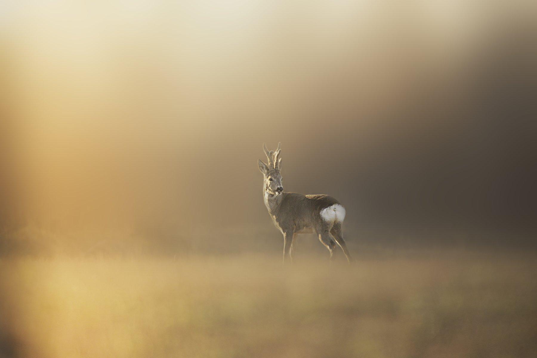 #wildlife #nature #beauty #deerel #grass, Zullu Donea