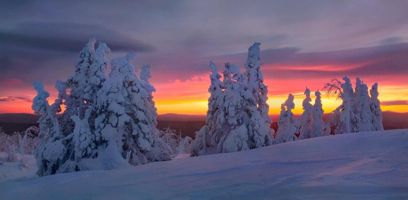 урал, зима, гух, закат, снег, ели, облака, Бродяга с севера