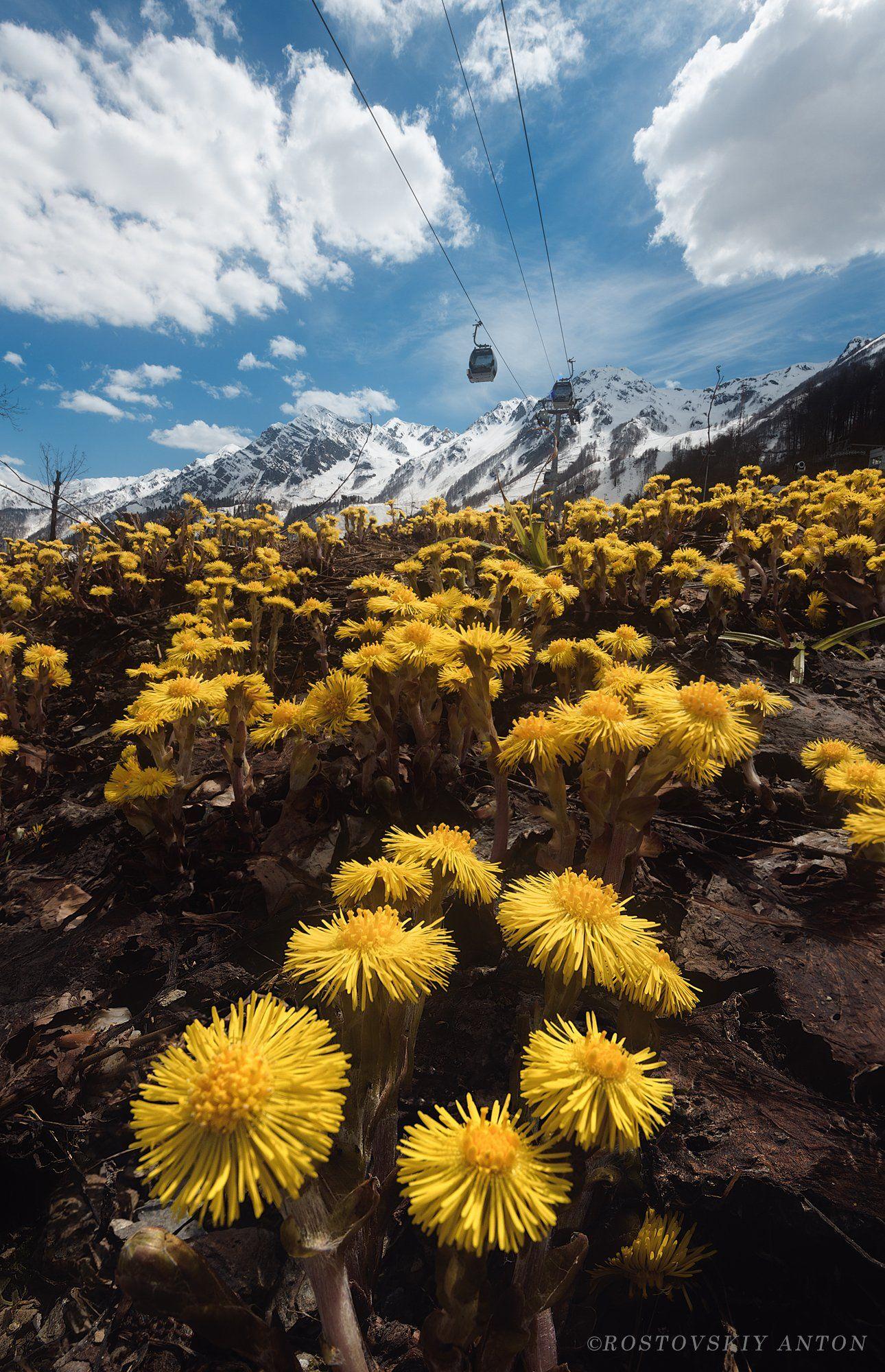 цветы, весна, горы, Сочи, Ростовский Антон