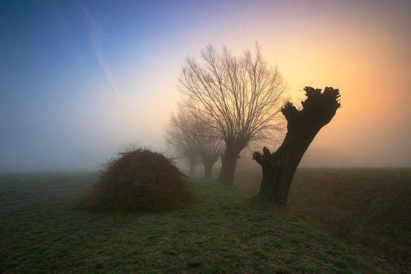 sunrise, morning, down, mist, willow, trees, mood, Jacek Lisiewicz