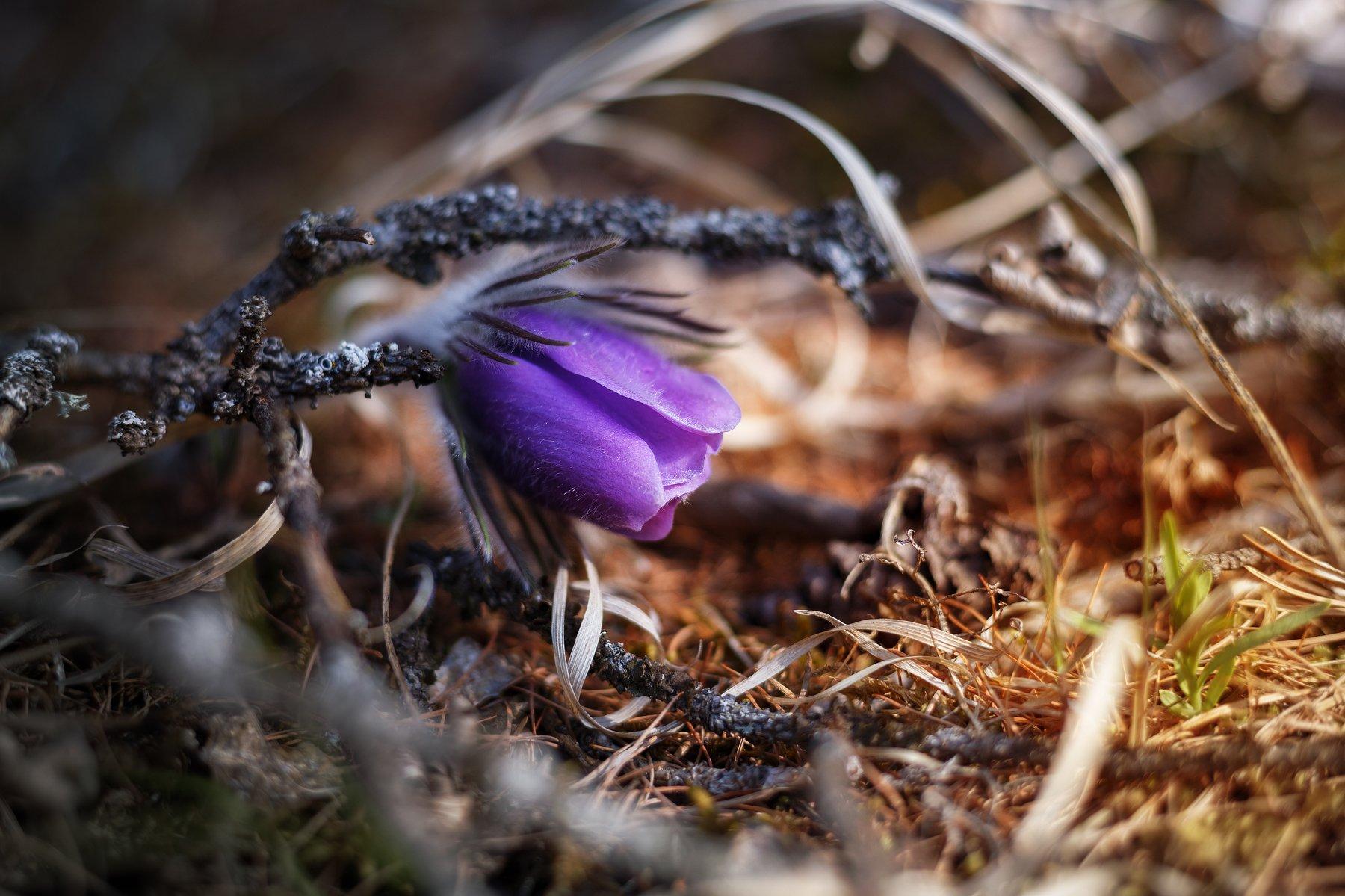 макро, цветы, цветок, природа, Попов Станислав