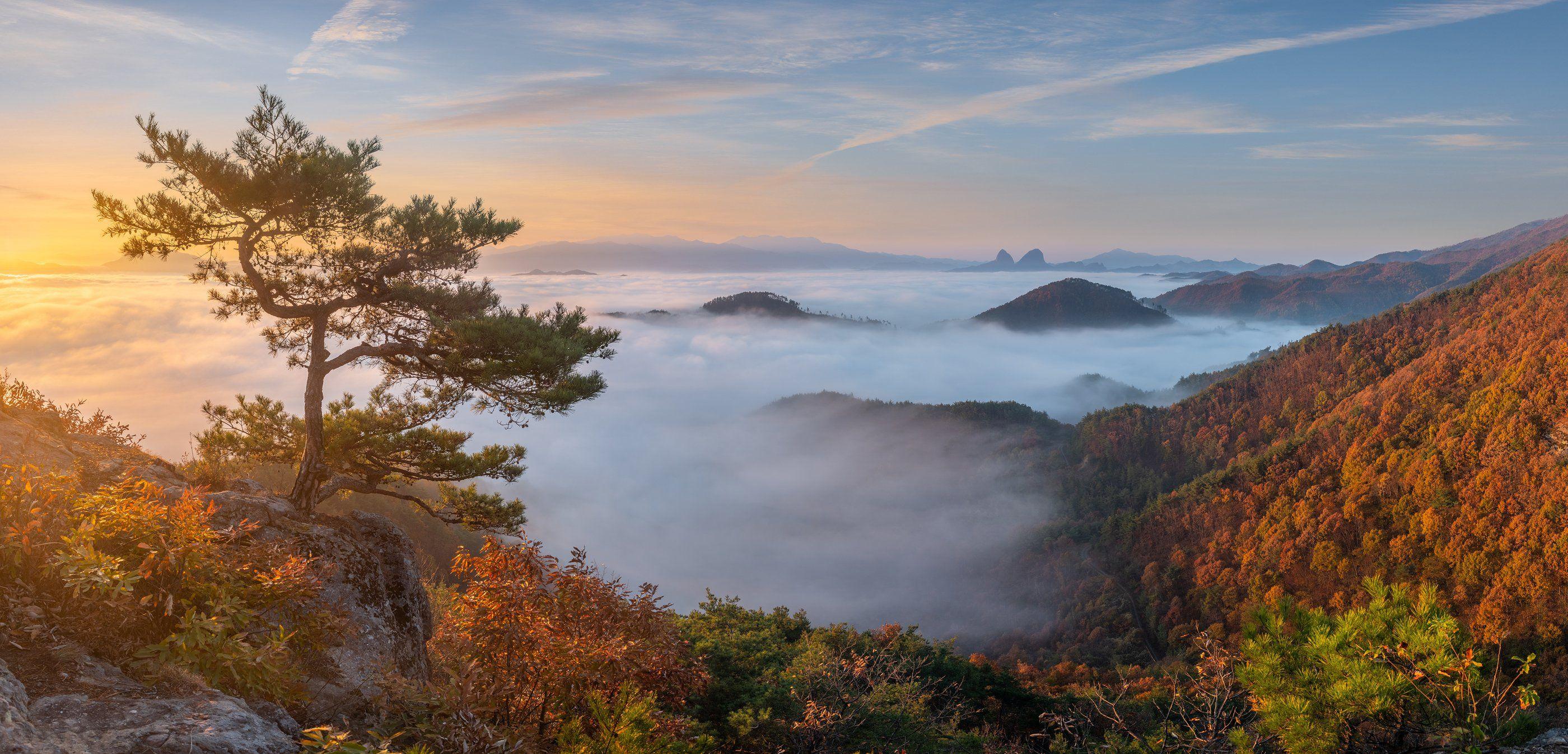 clouds, autumn, tree, mountains, dreamy, misty, pine, sunrise, 류재윤