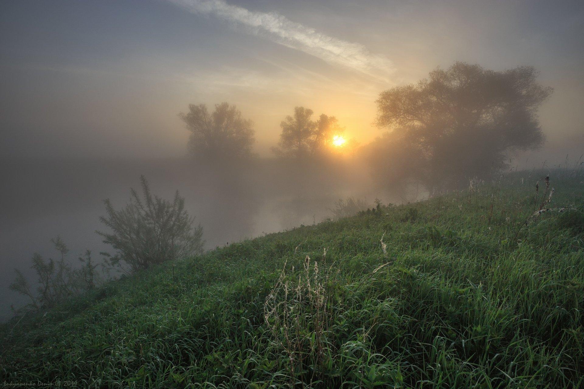 2019, россия, пейзаж, утро, рассвет, солнце, туман, трава, роса, паутина, берег, река, деревья, облака, Лукьяненко Денис