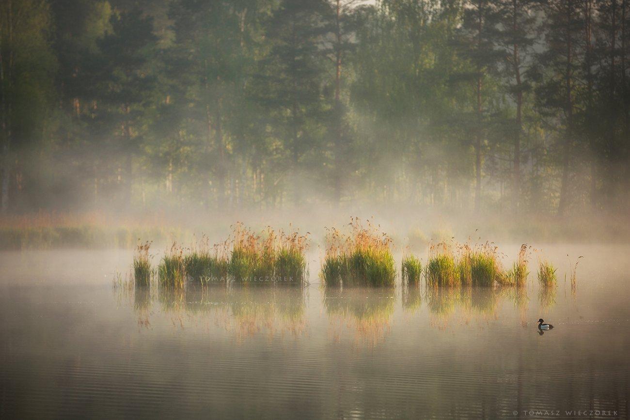 lake, poland, polish, landscape, sunrise, sunset, mood, musing, loneliness, beautiful, amazing, awesome, adventure, explore, travel, light, pond, fog, mist, Tomasz Wieczorek